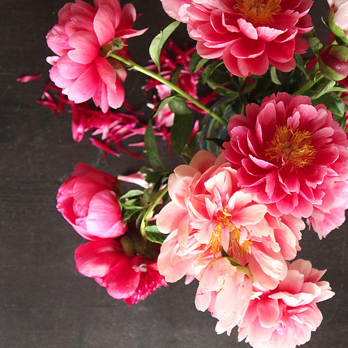 peony-splendor-3 | by secret agent josephine