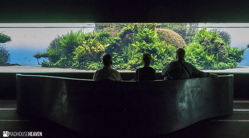 Lisbon Oceanarium - 0010