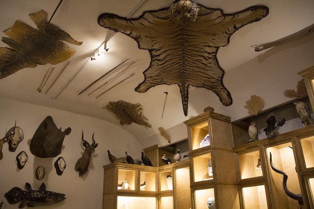 Museum of Natural Science_38