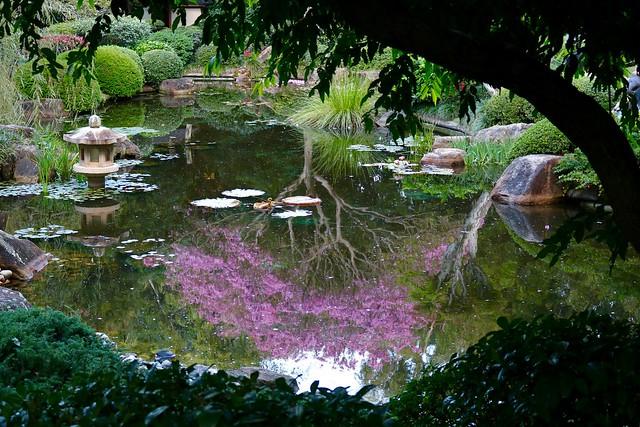 Japanese Garden Toowong