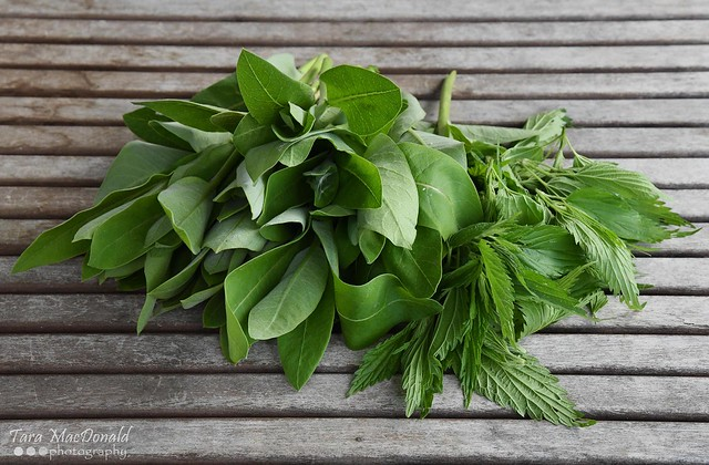 Milkweed Shoots & Stinging Nettle Tops