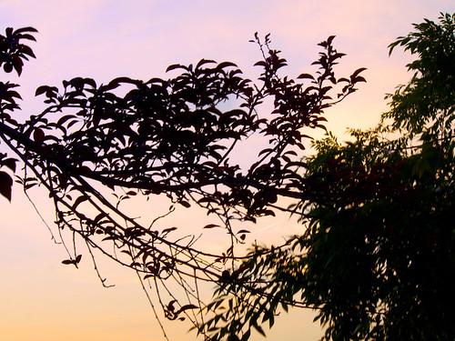 2015 balconygarden longexposure sunset