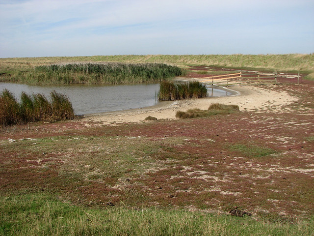 Elmley Marshes, Isle of Sheppey