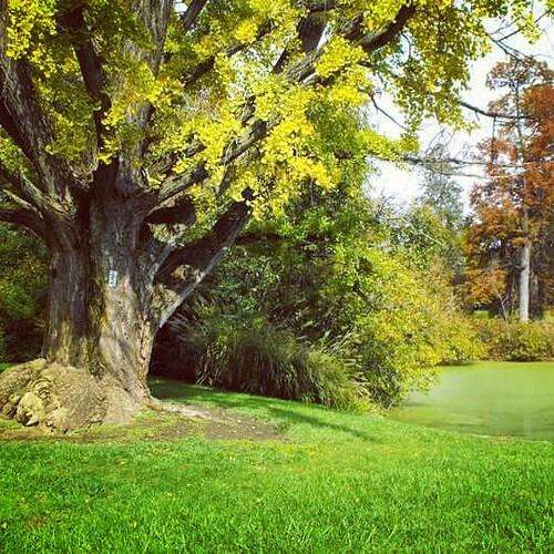 spring grove cemetery cincinnati ohio