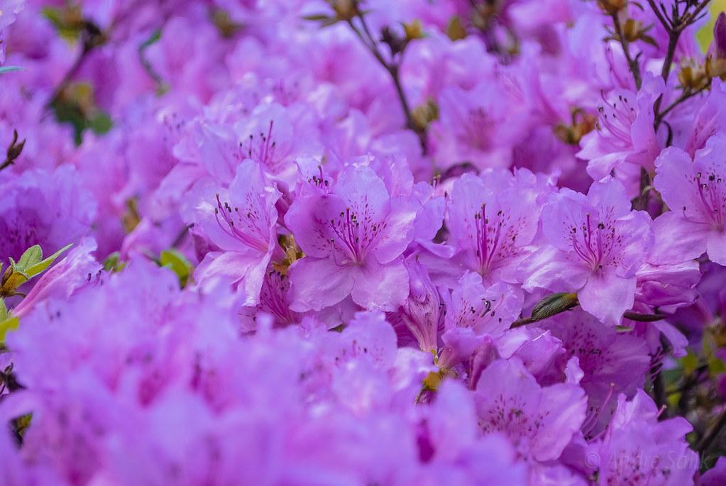 цветочная пена 17:53:46 DSC_6556