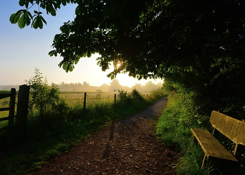 ©allrightsreserved vista sunrise trees sky mist bench outdoor leaves gate shadows twinkle sunstar path weather fence