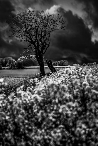 tree summer skanecounty sweden clouds nikond600 nocrop nohdr day blackandwhite landscape ngc