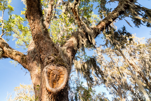 georgia history photography tourist treespiritsofstsimonsisland attraction coast coastal coastalgeorgia dawnamoorephotography dawnamoorephotographycom destination ga georgiacoast georgiasgoldenisles goldenisles handcarved handcarvedface handcarvedtreespirit historic image keithjennings location oaktree photo photograph picture saintsimonsisland seaisland stsimonsisland stsimonsislandtreespirit stsimonstreespirit thegoldenisles tourism travel treespirits unitedstates us