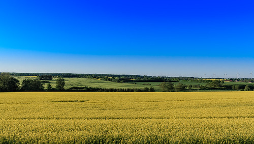 fs170528 djup fotosondag raps rapeseed fält fields blue blå himmel sky sommar summer