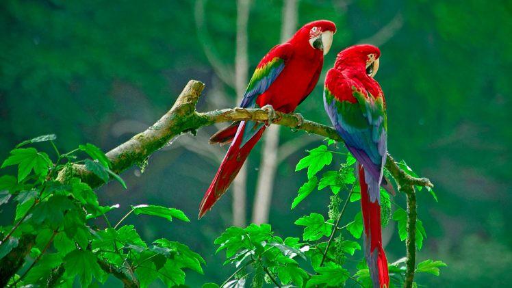 Animal Wallpaper Hd Beautiful Birds Photos Nature Anim Flickr