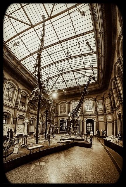 Berlin - Museum für Naturkunde - Brachiosaurus - Giraffatitan 05