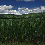 Maize field bridge ;)