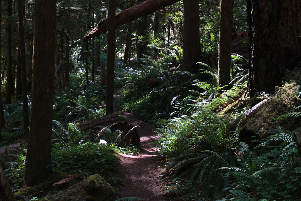 Ferny trail, near the end of the hike