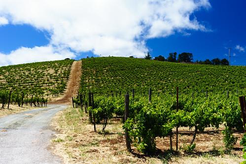 Ridge Vineyards | by dalecruse