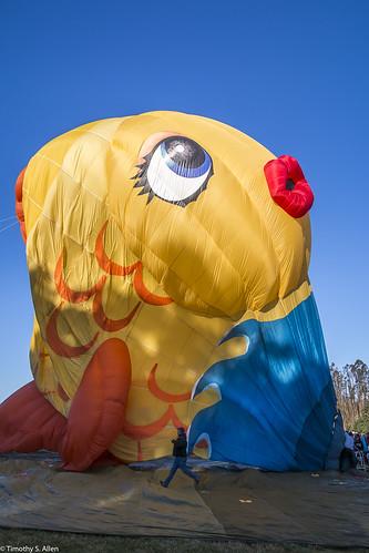 calfiornia sonomacountyhotairballoonclassic windlow balloons hotairballoon sonomacounty sushi deflating
