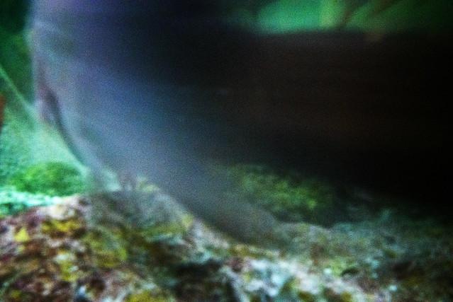 Fish Motion