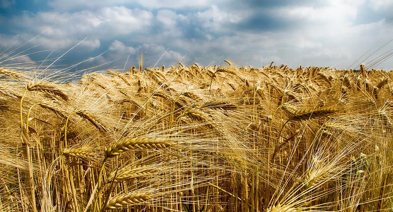 Grain and sky
