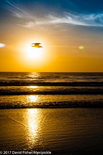 2017 sun sunrise bird silhouette seagull daytonabeach gold florida