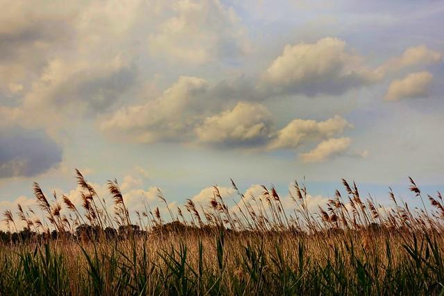 Riet en wolken