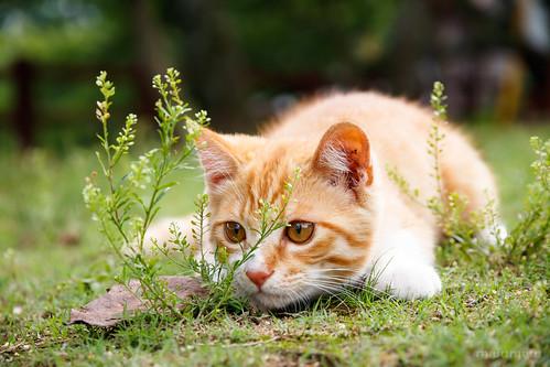 Cat   by mai-u