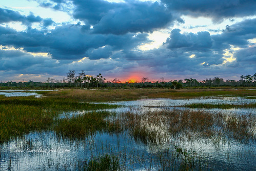 clouds cloudy sky weather sun sunrise landscape scenery nature mothernature trees grass grasses pineglades naturalarea pinegladesnaturalarea jupiter florida usa outdoors outside greatoutdoors