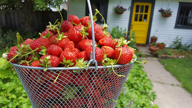 Good year for strawberries