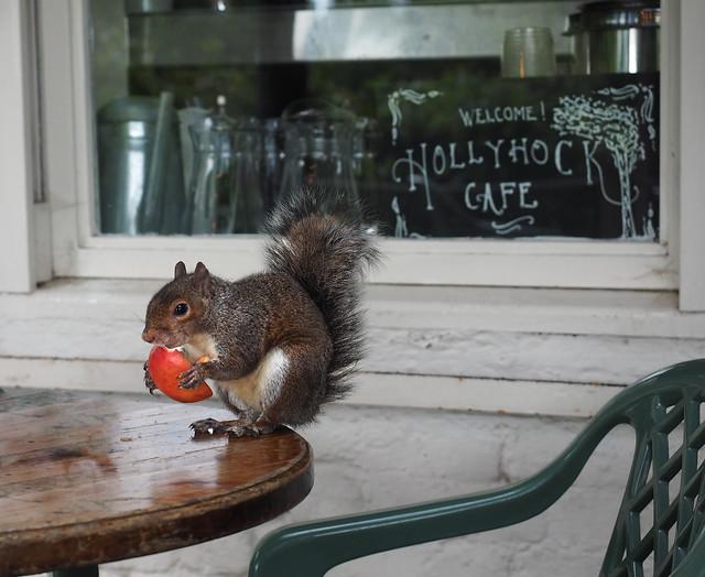 Café squirrel.