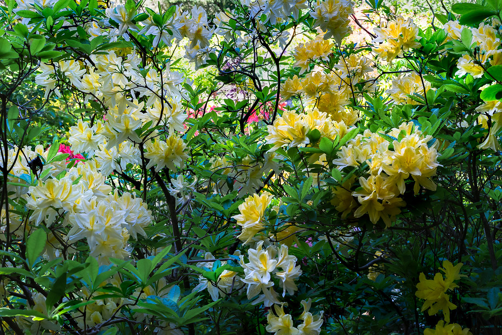 Les Fleurs 35268649590_8025baba1b_b