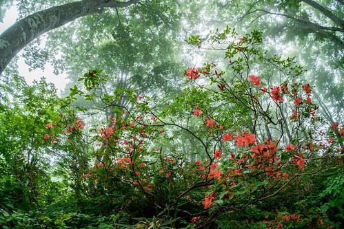 森の中   by hiroching