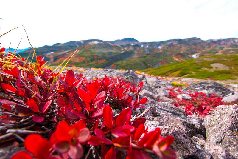 20150918-大雪山黒岳-0349.jpg