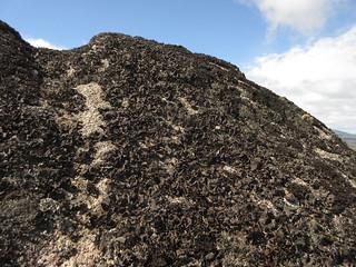 Lichen near summit of East Muir Gorm Craig | by malky_c