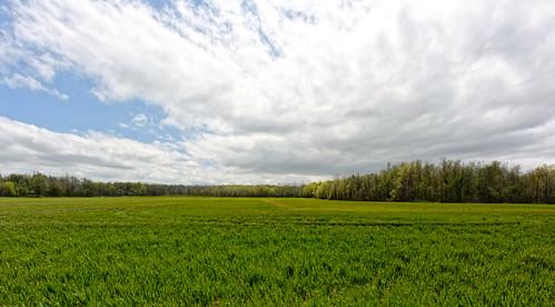 roxandtownship roxana fields 2017 michigan eatoncounty woodlot 3577 april wheat sky cloud nikon 1v2 v2 nikon1v2