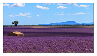 Valensole | by Ylliab Photo