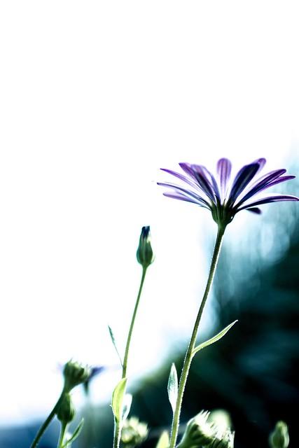 Flor expuesta