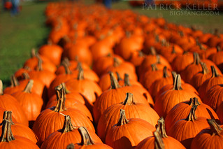 pumpkin_patch_3806 | by BigSéance