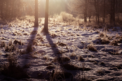 snow frosty winter morning swamp wetlands frozen cold chilly vegetation trees shadows sunrise amanecer enero january canon eos 5d mark iv cityforest nieve nieves