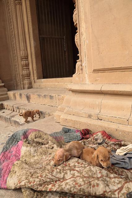Street Puppies