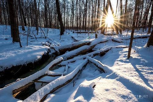 logs trees michigan sunrise winter woods snow annarbor unitedstates us goldenhour