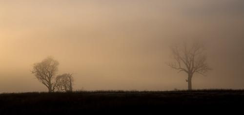 trees tree fog mist sunrise early morning tasmania carrick rural australia