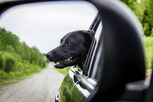 """K9 from sideview mirror"" 