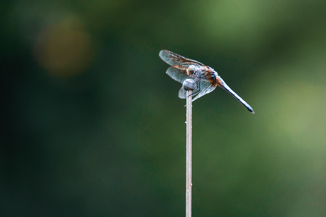 Dragonfly2 Series E 70-210mm f4