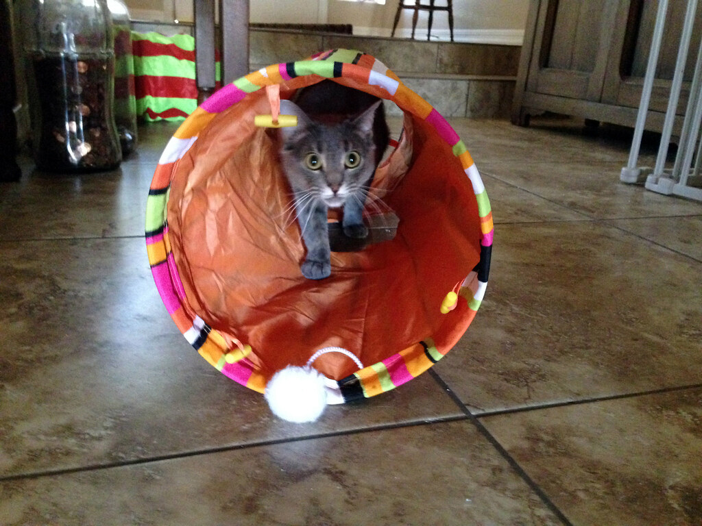 tube kitty