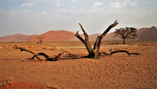 Namibia's Beauty: near the Dead Vlei in Sossusvlei