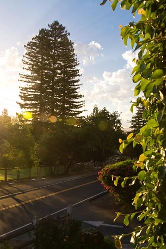 yountville napa sunrise