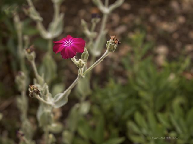 Vrtovi cvijeća s kamenjara u Slumu kod gospođe Anite (13)