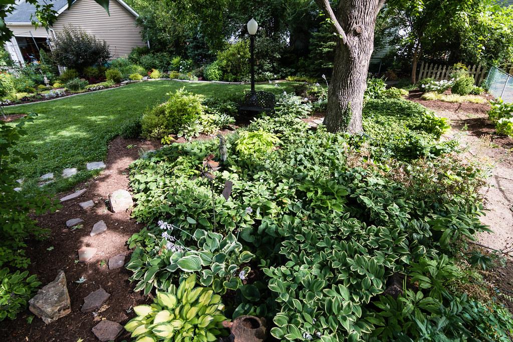 Mid-June   Shade garden under sweet gum tree.   Fred ...