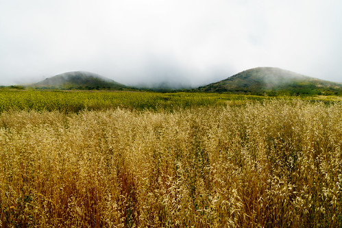 california hike grass mustard desert mountain mist peak mugu orange green white brown weather