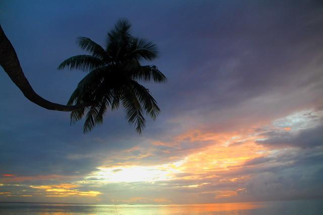 Cocotier au Sunset à Moorea