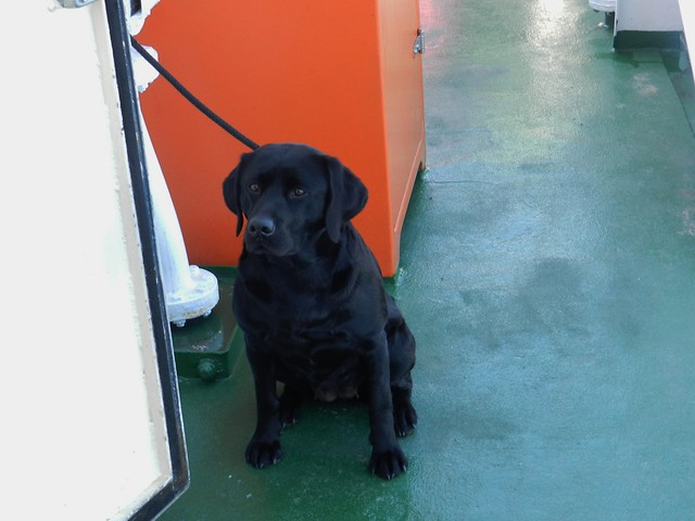Waiting Patiently, MV Loch Nevis, Mallaig to Island of Eigg, May 2017