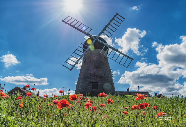 Whitburn Mill And Poppies
